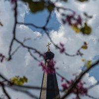 Весна :: Сергей Волков