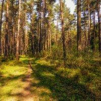 На лесной тропинке :: Vladimir
