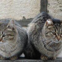 Братцы, но не кролики :: Юлия Грозенко