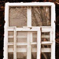 ...Windows... :: Ольга Нарышкова
