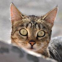 ...эти глаза напротив... :: Ольга Нарышкова
