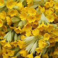 Весенние цветы :: Ольга )
