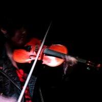 violin :: Марина Попова