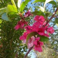 цветы :: Зарина Азадова