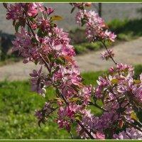 Цвет апреля :: Юрий Муханов