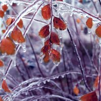 Зима :: Lucio
