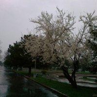 Утренняя дождь :: Janybek Mukashov
