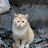 помойный котяра :: Лидия кутузова