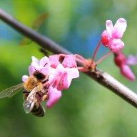 Весна. :: Алина Аверина