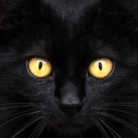 black cat :: Vitaliy Mytnik