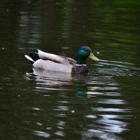 На озері :: Дмитрий Гончаренко
