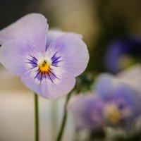 мои цветы... :: Марина Брюховецкая
