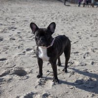 Собака на побережье :: Екатерина Калашникова
