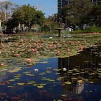 вода и цветы :: evgeni vaizer