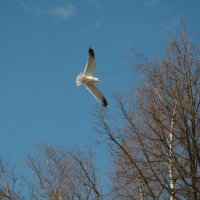 чайка :: Александр Малюгин