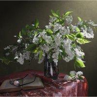 Черемухи цвет :: Валентина Белоусова