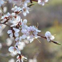 Весна.. :: Natali Klyueva