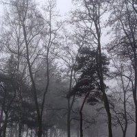 туман :: василий