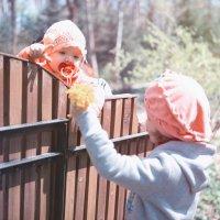 весенние прогулки :: Ирина Руденко