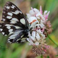 паук и бабочка :: Davit Petoyan