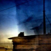 ...кот на крыше... :: Ольга Нарышкова