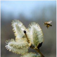 За майским мёдом :: Тарасенко Владимир