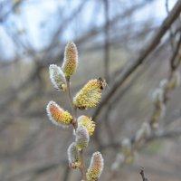 Весна пришла! :: Ольга Кунцман