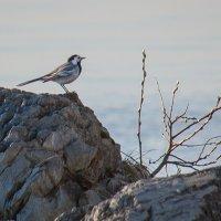 Птичка на скале :: Виктория Мусина