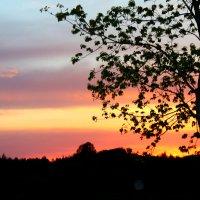 вечерняя гармония.... :: Валерия Родина