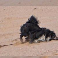 Горячий песок :: Андрей Дворников