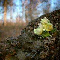 И на камнях растут деревья... :: Сибирь Эвенкия Евгений Щербаков