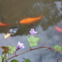 Золотые рыбки в волшебном озере :: Natasha Chevtchenko