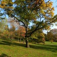 Осенним днём в Хай Парке (Торонто) :: Юрий Поляков
