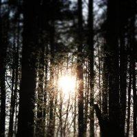 солнце :: кристина ниточкина