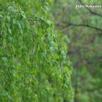 Зелёный водопад :: Fidel Nekastro