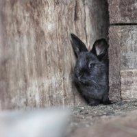 кролик) :: Galina .