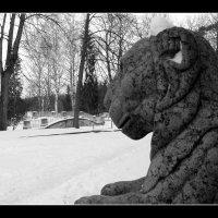 Лев из Павловска :: vadim