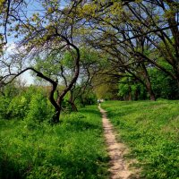 тропинка около дубовых деревьев :: юрий иванов