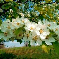 весна :: Анна Кравченко