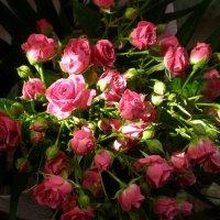 Розовый букет :: Татьяна Пальчикова