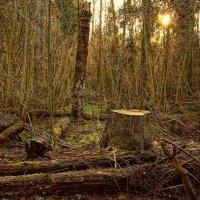 Весна в лесу :: Владимир Воробьев