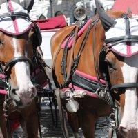 Австрийские кони :: Александра Старых