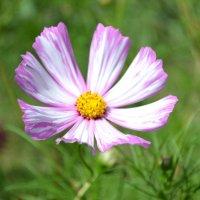 Цветок :: Юляшка Гордиенко