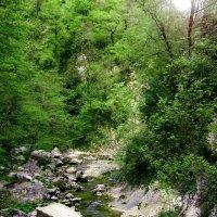 Река :: HelenaZ Z