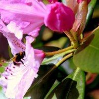 nektara mnogo ne byvaet! :: darya or