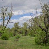 Про деревья :: Aine Lin