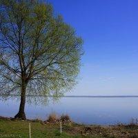 Красота весеннего дерева :: Анастасия Зубарева