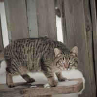 Богородский кот :: Наташа Попова