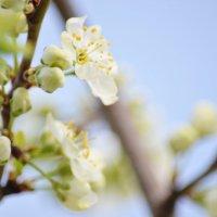 весна :: Marina Marik