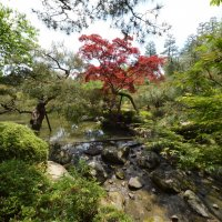 Японские сады :: VITALI VITALI